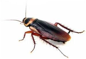 cockroach-control